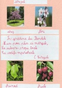 cireșe 1