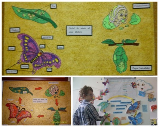 ciclu de viață plante, fluture, broască nov20153