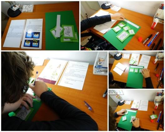 proiect-biologie-clasa-a-v-a-fasolea1
